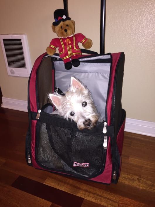 Bella's Coming With Us!